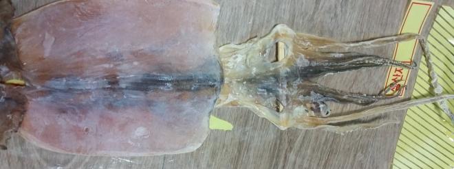Getrockneter Sepia