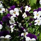Von Blumen und Frühlingsfesten