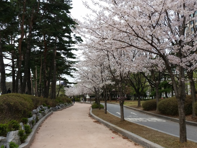 Korea April 682