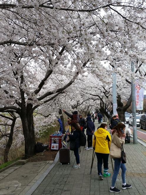 Korea April 698