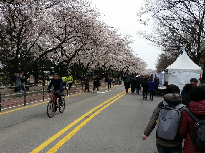 Korea April 709