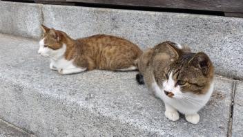 Tempelkatzen