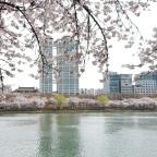 Frühling 2019 in Seoul